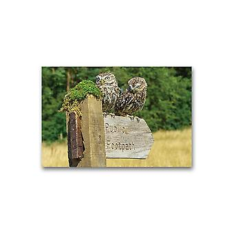 Two Little Owls On A Footpath Poster -Image by Shutterstock