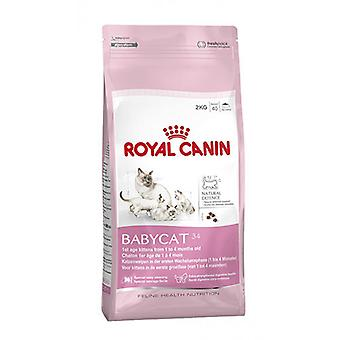 Royal Canin Babycat 34-täydellinen pentu kuiva kissanruoka