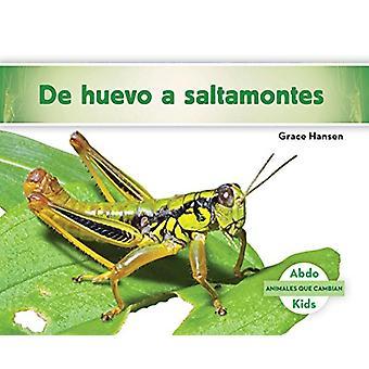 de Huevo a Saltamontes (Becoming a Grasshopper ) by Grace Hansen - 97