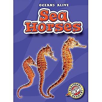 Zeepaardjes (Oceans levend)