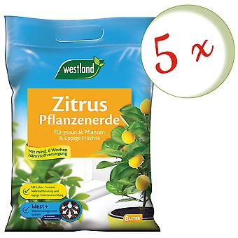 Sparset: 5 x WESTLAND® citrus plants Earth, 8 liters