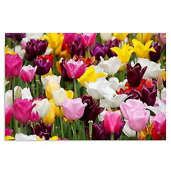 Painel Deco, tulipas 4