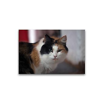Utrolig Calico Cat Portrett Plakat -Bilde av Shutterstock