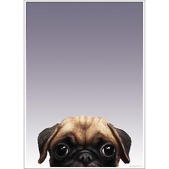 Inquisitive Creatures Pug Poster