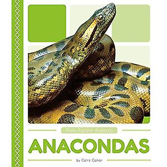 Anacondas (Rain Forest Animals)