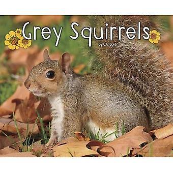 Grå egern (Pebble Plus: skov dyreliv)
