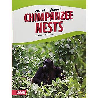 Nids de chimpanzés