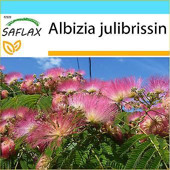 Saflax - coffret cadeau - 50 graines - Pinc Acacia - Albizia - Albero della seta - Acacia de Constantinopla - Schlafbaum