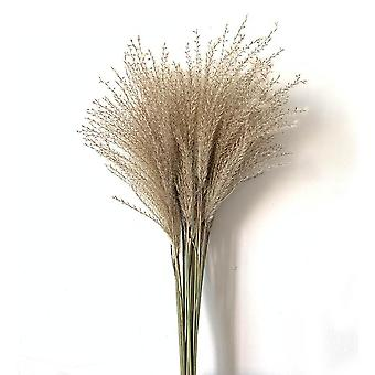 20 Pieces of natural dried eco friendly young pampas grass decor