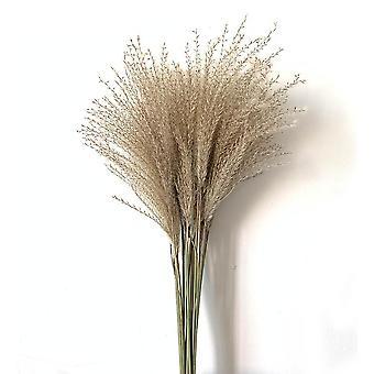 20 Peças de decoração de grama de grama jovem e ecológica natural