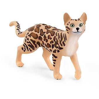 Bengal Cat USA import