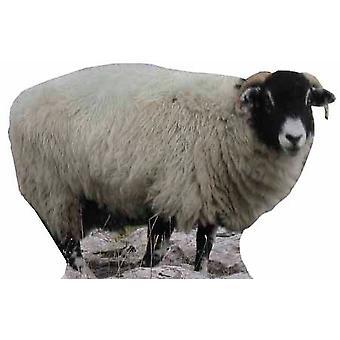 Sheep - Lifesize Cardboard Cutout / Standee