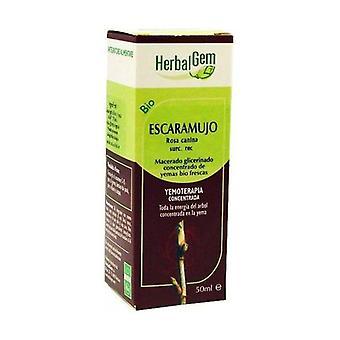 Glycerinerad Macerated Nypon 50 ml