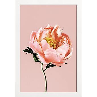 JUNIQE Print - Coral Peony - Floral Poster in Pink