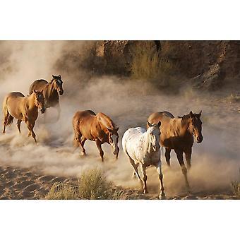 Sfondo Mural Cavalli Selvaggi