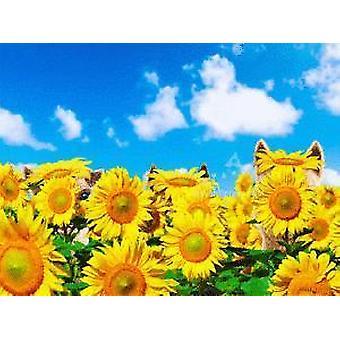 Happy Sunny, 3-d - Syntymäpäiväkortti