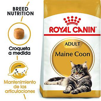 Royal Canin Maine Coon 31 (Cats , Cat Food , Dry Food)