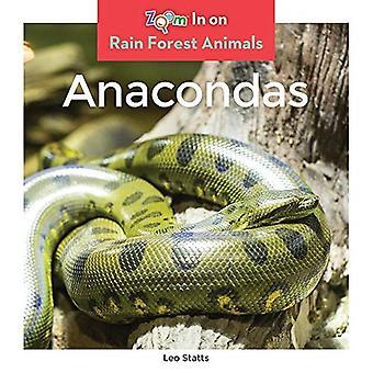 Anacondas (Rain Forest Animals)