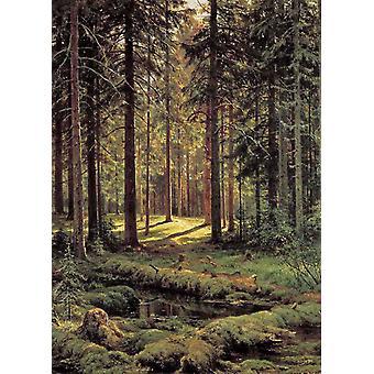 Conifer-Sunshine, Ivan Shishkin, 60x43cm