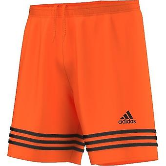 Adidas Entrada 14 F50634 universal all year men trousers