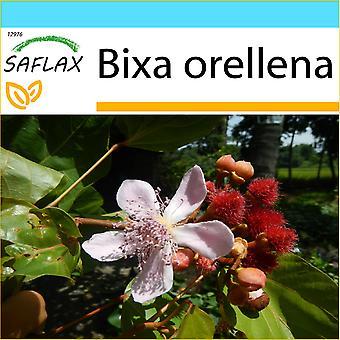 Saflax - Gift Set - 20 zaden - Lipstick Tree - Arbre rouge à lèvre - Achiote - Achiote - Lippenstift - Strauch