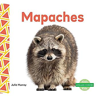 Mapaches (Raccoons) by Julie Murray - 9781624026041 Book