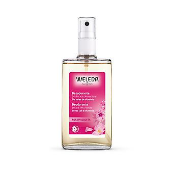 Weleda Rosa Mosqueta Deodorant 24h Eficacia Spray 100 ml naisille