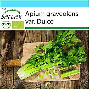 Saflax - Gift Set - 500 sementes - Orgânico - Pascal celery - BIO - Céleri en branches - Tall Utah - BIO - Sedano - Ecológico - Apio - Utah Alto - BIO - Stangensellerie - Tall Utah