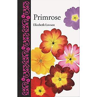 Primrose (botanico)