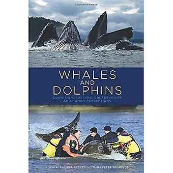 Baleines et dauphins : cognition, culture, conservation et perception humaine