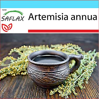 Saflax - Lahjasetti - 250 siementä - Sweet Wormwood Qing Hao - Armoise annuelle Qing Hao - Artemisia annuale Qing Hao - Ajenjo dulce Qing Hao - Chinesischer Beifuß Qing Hao