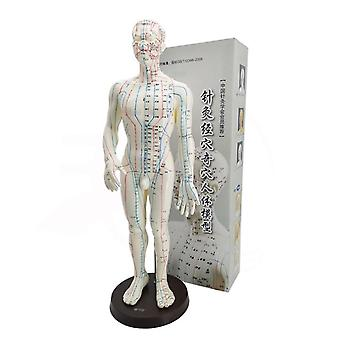 Female / Male Acupuncture Model 50cm With Chinese Points & Base Body