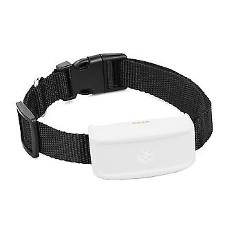 Global Locator Echtzeit Haustier GPS Tracker für Haustier Hund / Katze GPS Halsband Tracking Kostenlose Plattform