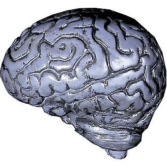 Grey Human Brain