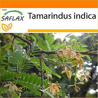 Saflax - jardín en la bolsa - 4 semillas - Tamarindo - Tamarinier - Dattier d'Inde - Dattero dell'India - Tamarindo - Tamarinde / Indischer Dattelbaum