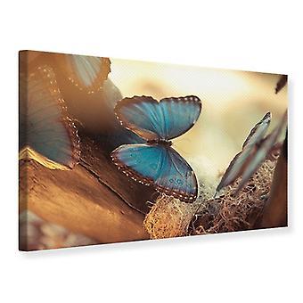 Canvas Print vlinders