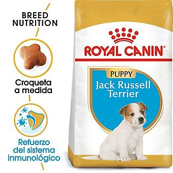 Royal Canin Jack Russell  Junior (Dogs , Dog Food , Dry Food)