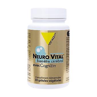Neuro Vital None