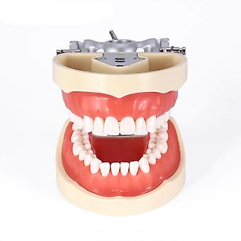 Standard 32 Pcs Removable Teeth Dental Dentist Typodont Model Removable Teeth Soft Gum Model For Dentists