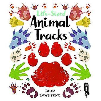 Life-Sized Animal Tracks (Life-Sized)