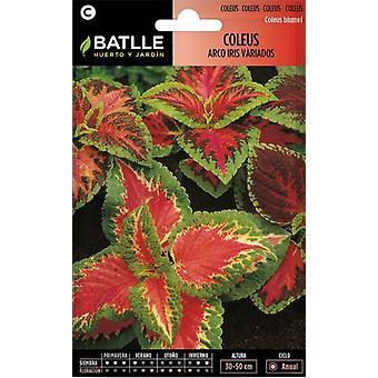 Batlle Rainbow Hybrid Coleus (Garden , Gardening , Seeds)