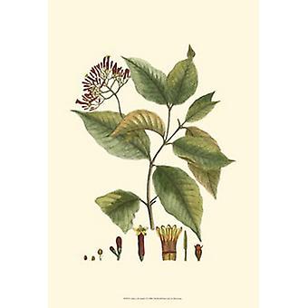 Crimson Botanical I Poster Print by Hiersman (13 x 19)