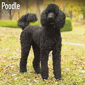Otter House Square Wall Calendar 2021 - Poodle Dog