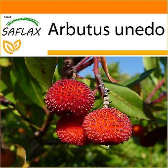 Saflax - ogród w worku - 50 nasion - drzewo truskawkowe - Arbousier - in - Árbol de las fresas - Erdbeerbaum
