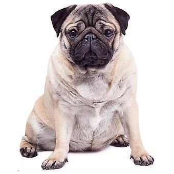 Giant Pug Dog Cardboard Cutout / Standee / Standup