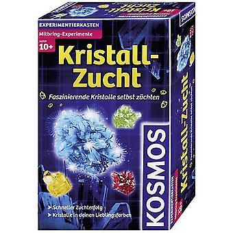 Kosmos Mitbring-Experimente Kristall-Zucht 659028 Wissenschaftskit ab 10 Jahren