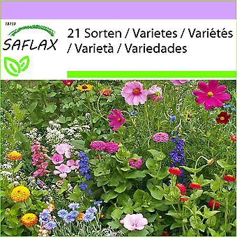 Saflax - 1000 graines - jardin chalet - jardin chalet - jardin chalet - Jardín de la cabaña - Garden Cottage