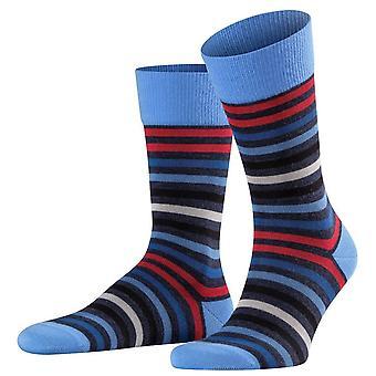 Falke tonede stribe sokker-blå/rød