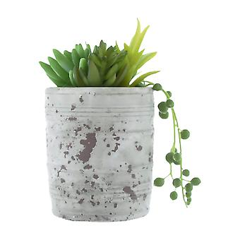 Mixed Succulents Green in Distressed Cement Pot 16cm