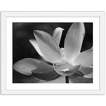 Bild i vit ram, vita liljor
